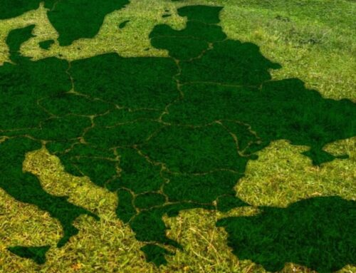 Positive Developments: Progressive Leaders and Environmental Approaches in Central-Eastern and Southeastern Europe